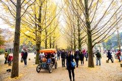 一棵银杏树的秋叶在娜米海岛上的 库存图片
