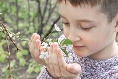 一棵青春期前的白种人男孩嗅到的白色樱桃花在春天庭院 免版税库存照片