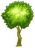 一棵高大的树木 库存图片