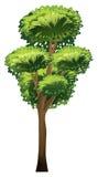 一棵高大的树木 免版税库存照片