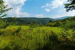 一棵高年轻草和野花在山和蓝色多云天空的绿色树木繁茂的小山 休息地方和 免版税库存照片