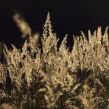 一棵高草的领域 免版税库存照片