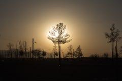 一棵年轻树的Silouhette到日落光里,伊斯法罕,伊朗 库存照片
