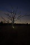 一棵死的树的剪影在晚上 库存图片