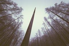 一棵死的树的干燥树干在森林里 库存照片