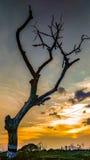 一棵绝种树被夺取晚上 免版税库存照片