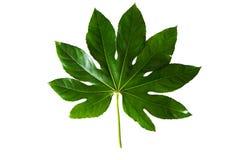 一棵绿色新鲜的植物。 免版税图库摄影