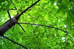 一棵绿色树在阳光下 免版税库存图片