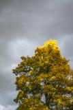 一棵黄色树 免版税库存照片