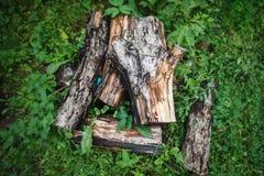 一棵年迈的苹果树的被锯的树干 免版税库存图片
