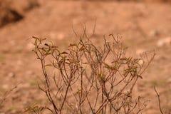 一棵茴香植物有棕色背景 库存图片