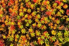 一棵suculent植物的看法 免版税库存图片