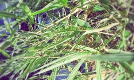 一植物 免版税库存照片