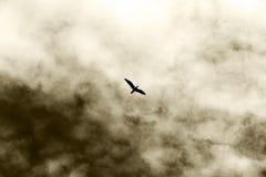 一次偏僻的鸟飞行,反对多云天空 库存照片