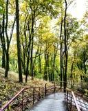 一次在森林里 免版税图库摄影
