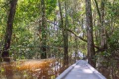 一次瞥见到Cuyabeno野生生物储备, Sucumbios省里 免版税库存照片