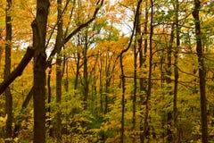一次远足在森林 免版税库存照片