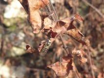 一次飞行的细节在一片干燥叶子的 免版税库存照片