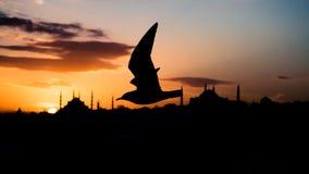 一次鸠或鸽子飞行的剪影在老镇前面的在伊斯坦布尔土耳其 库存照片