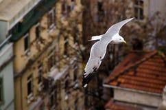 一次鸥飞行在伊斯坦布尔 库存图片