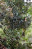 一湿spiderweb的特写镜头 免版税库存图片