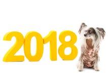 一滑稽的狗中国有顶饰在题字附近坐2018年 背景查出的白色 户内 免版税库存照片