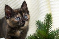 一点三色小猫在云杉附近坐 免版税库存照片