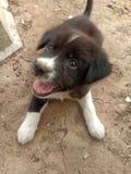 一点与bling的眼睛的小狗 免版税库存照片