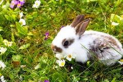 一点兔宝宝在草甸 库存图片