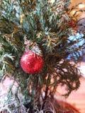 一点圣诞树 库存图片