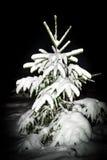 一点圣诞树 库存照片