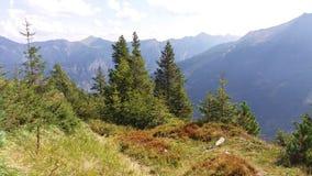 一点在山边缘的森林 免版税库存照片