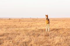 一点在牧场地的逗人喜爱的驹身分,农村风景 免版税库存照片