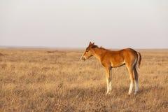 一点在牧场地的逗人喜爱的驹身分 库存图片