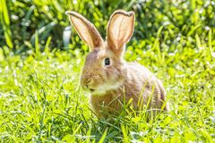 一点在绿草,复活节时间的兔宝宝 图库摄影