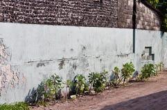一点在街道上种植在砖墙下 库存图片