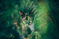 一点姜小猫庭院 免版税库存照片