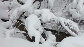一点小河在冬天森林通过蓬松漂泊跑 股票录像