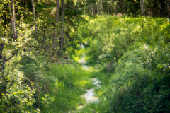 一点小河在森林里 库存图片