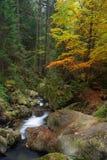 一点小河通过森林在博登迈斯,巴伐利亚德国, 免版税库存图片