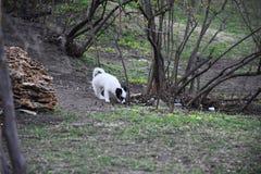 一点小狗在公园走 免版税库存图片