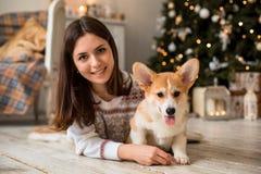 一点小狗威尔士小狗羊毛衫使用与他的有一个女孩的皮带一件白色毛线衣的 库存图片