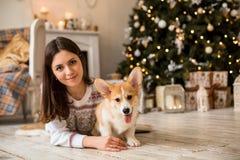 一点小狗威尔士小狗羊毛衫使用与他的有一个女孩的皮带一件白色毛线衣的 免版税库存图片