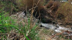 一点山小河在早期的春天 股票视频