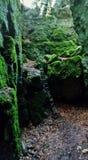 一点峡谷在森林里 库存照片
