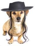 一点帽子狗 免版税库存照片