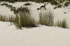 一点撒哈拉大沙漠在澳大利亚 免版税库存图片
