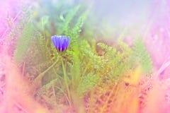 一点柔和的花在草甸 免版税库存照片