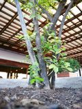 一点树在城市 免版税库存照片