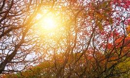 一点树枝杈 图库摄影